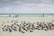Birds, Miami Beach